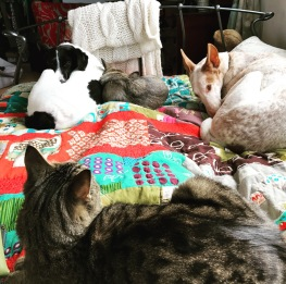 The cat has expressed his unhappiness. The dogs have adjusted their position